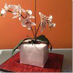 Tarta Maceta de Orquideas